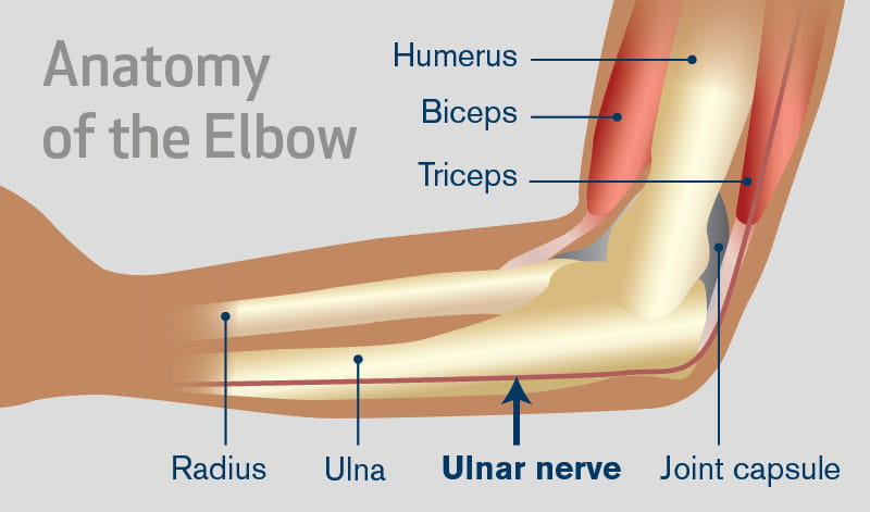 the ulnar nerve and your elbow