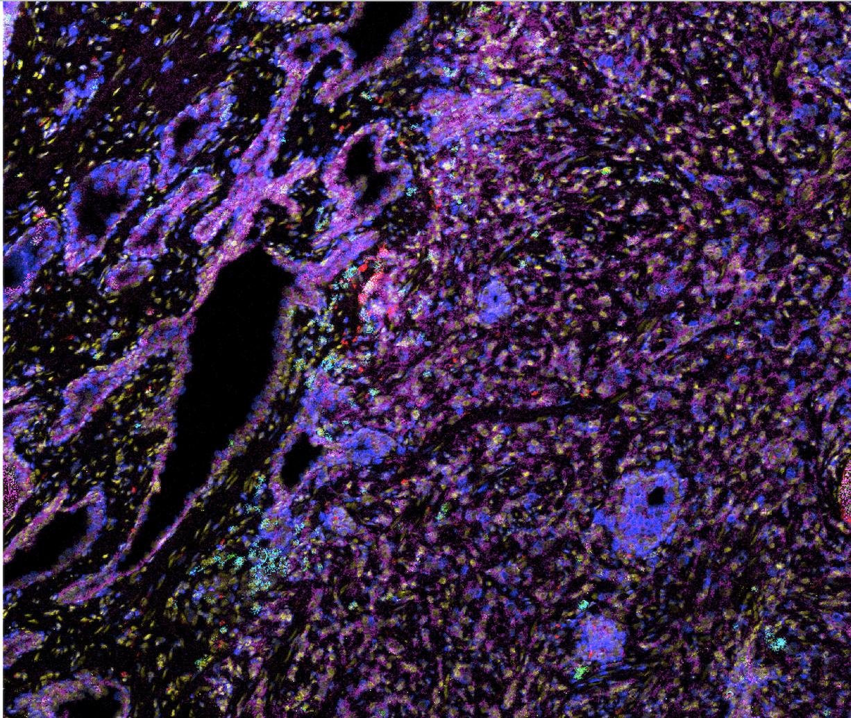 Immunomonitoring Image 2