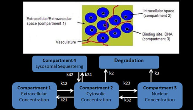 Biomathematics Core
